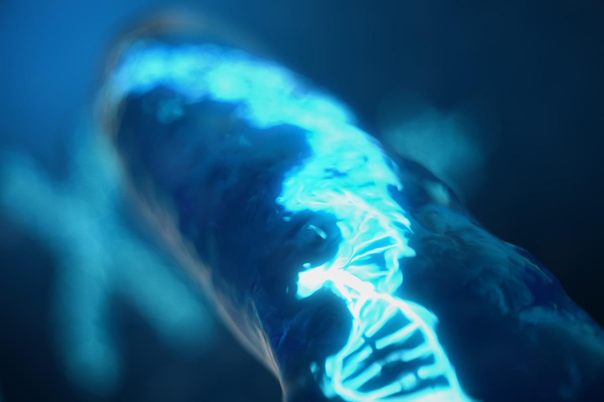 telomera